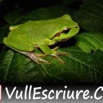 Aquesta setmana… La versió original d'«El príncep granota» (Germans Grimm)