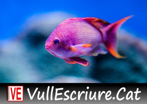 20171102-Vull_Escriure-Sireneta-Andersen-Monterey_Aquarium_38-xbeta-Flickr